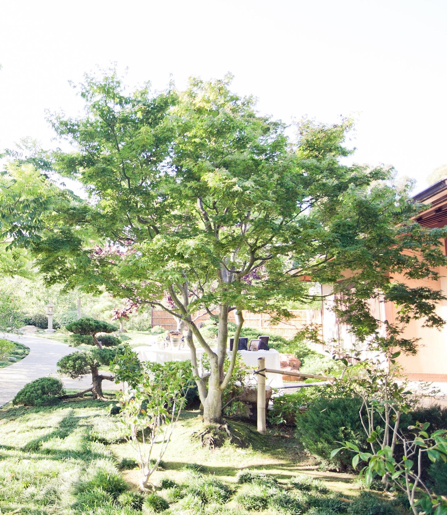 photo credit: tangerin tree photography