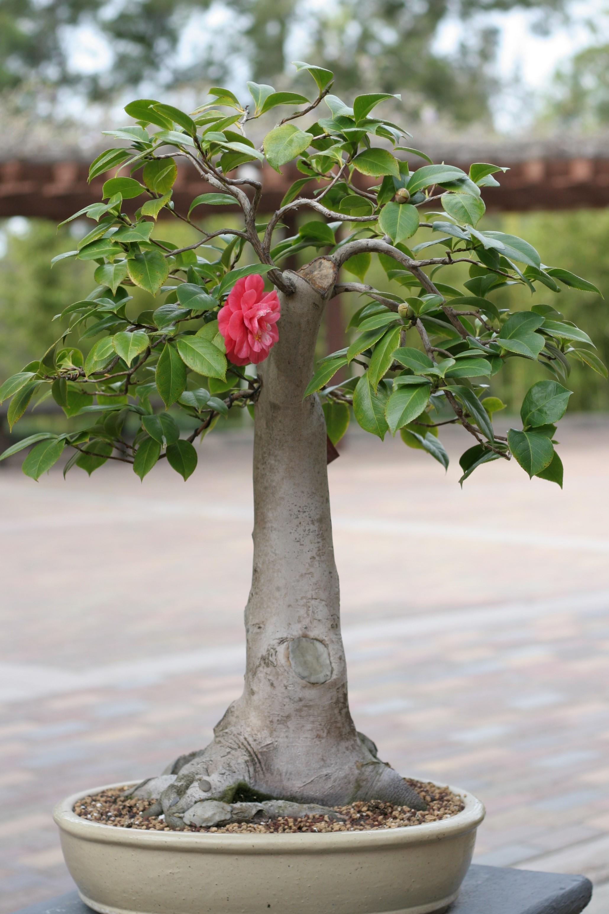 10. Camellia