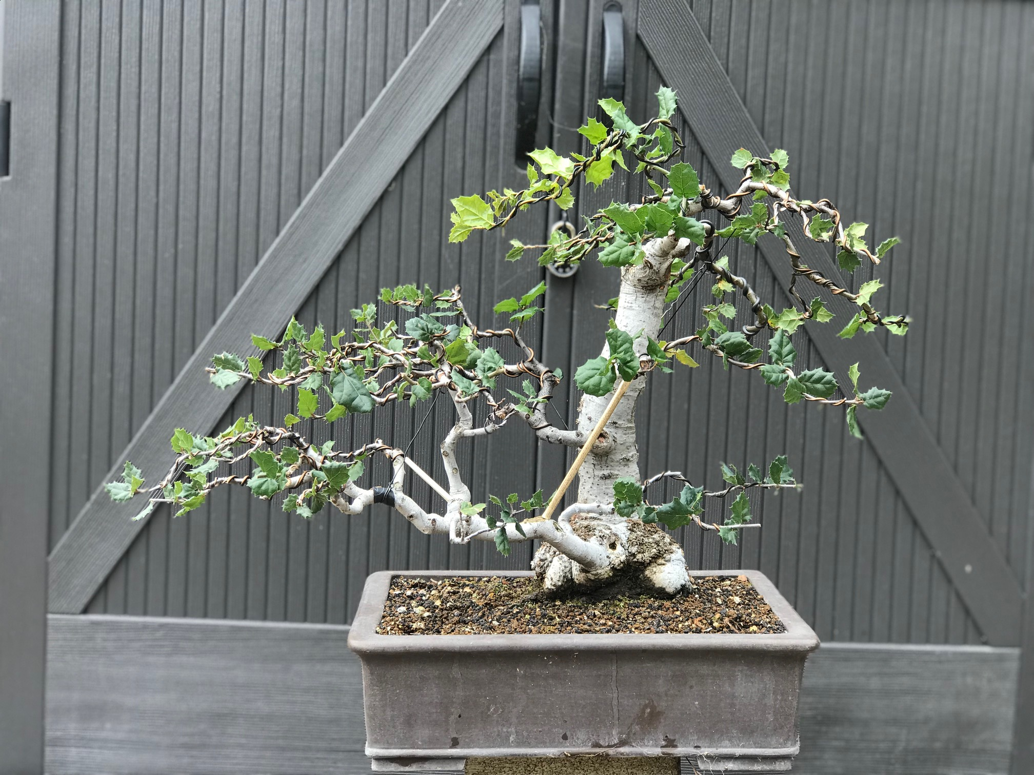 Bonsai Collection Japanese Friendship Garden
