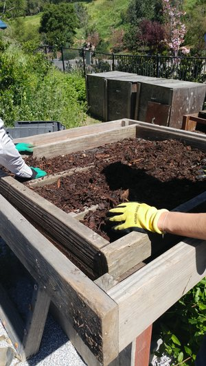 Compost+Sifting+-+April+1+2019+-+Chi+Nakata+-+(1).jpg