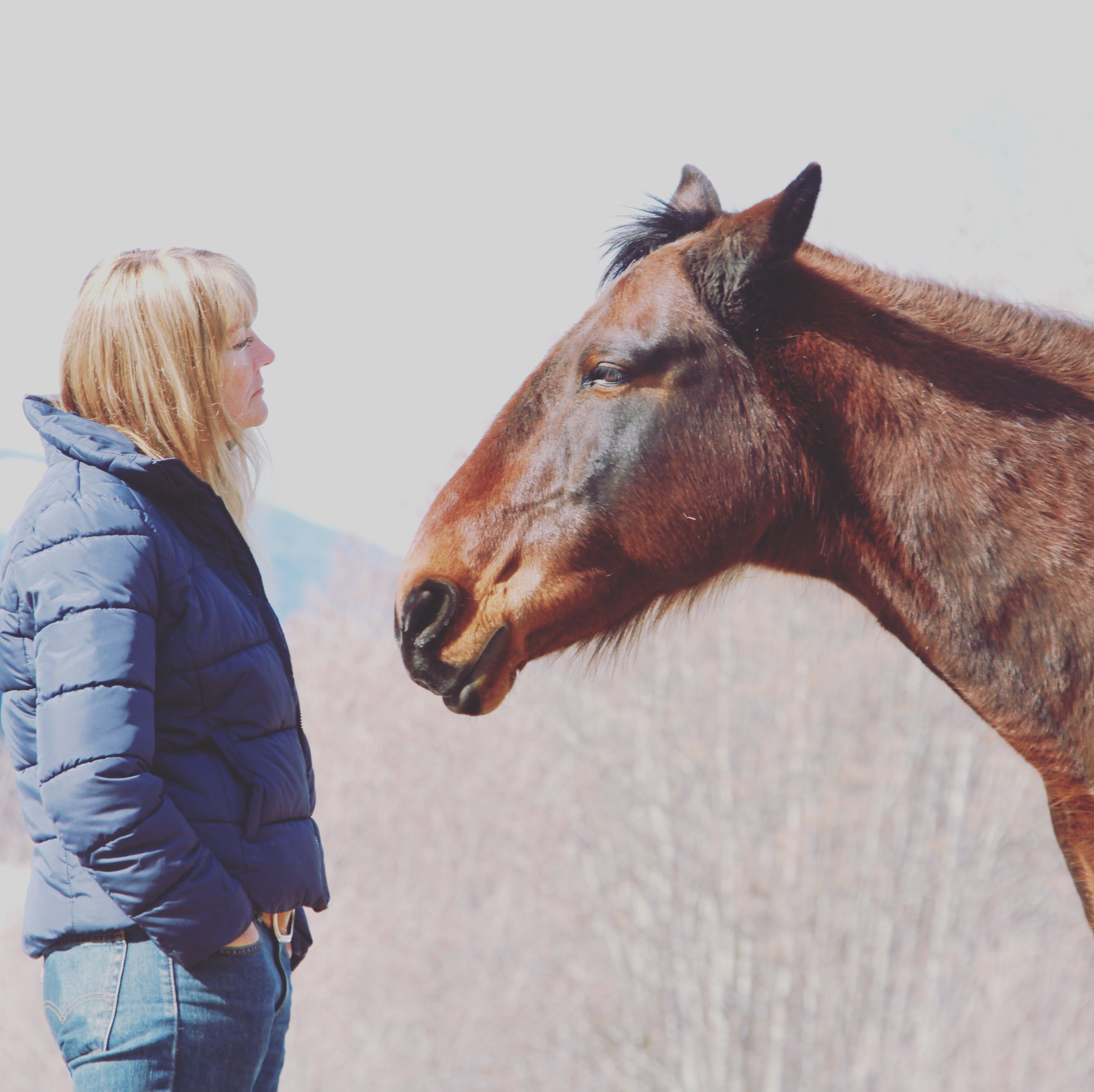 Equine Programs - Connect and interact with a herd of 27 rescue horses. Our equine assisted learning programs are the first of their kind in North America. Add an unforgettable equine experience package to your next group event.