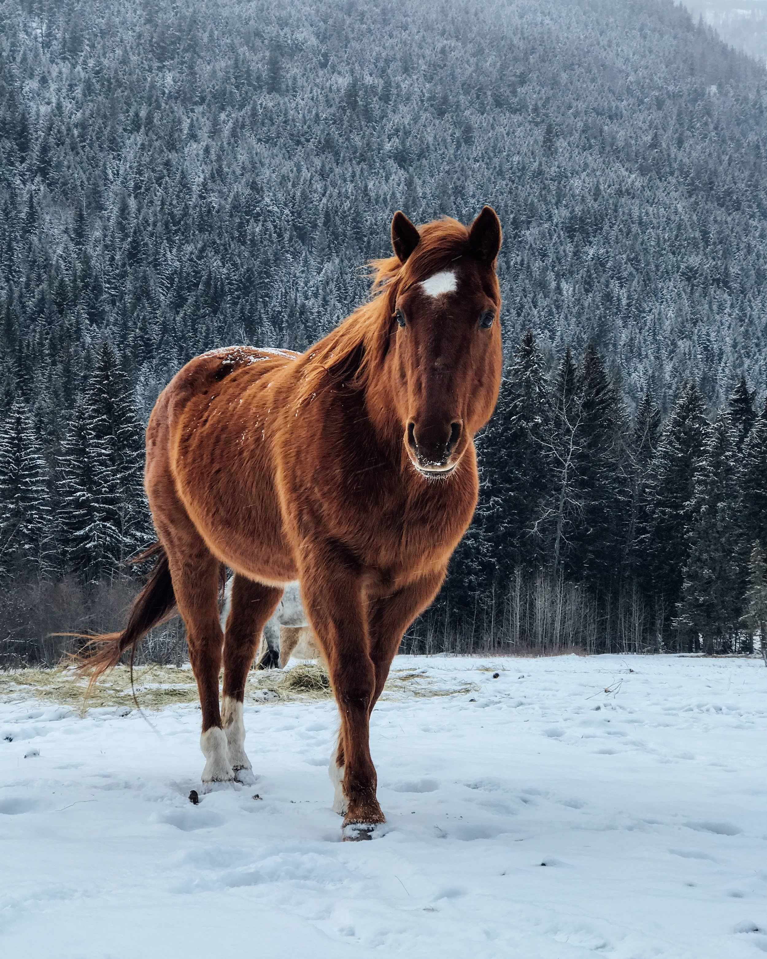 equine connection horse.JPG