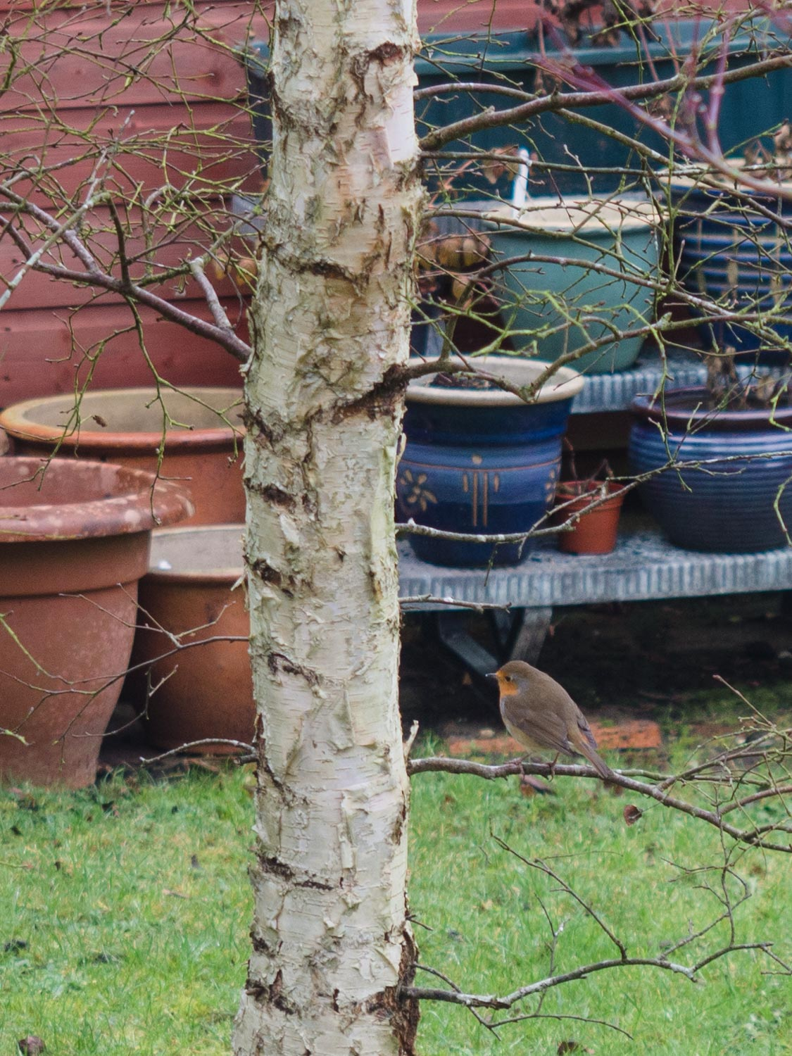 Apparently 'this' little robin visits my Dad's garden every day. Hard to catch on camera though!