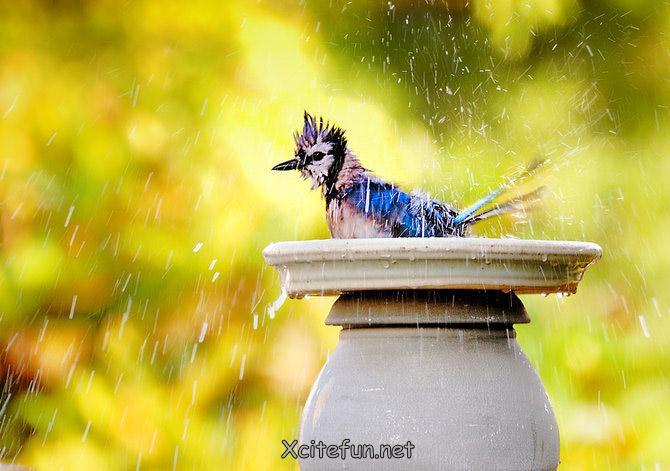 Photo credits:http://waseempk.blogspot.com/ and Xcitefun.net