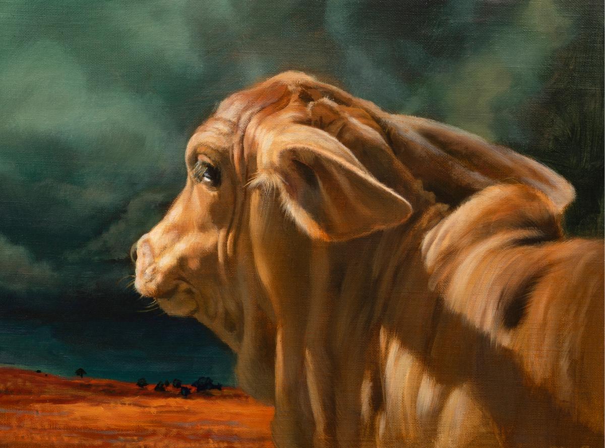 "(SOLD) Teresa Elliott ""Brahman Calf""12"" x 16""Oil"