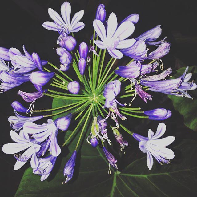 #nightflower #🌸