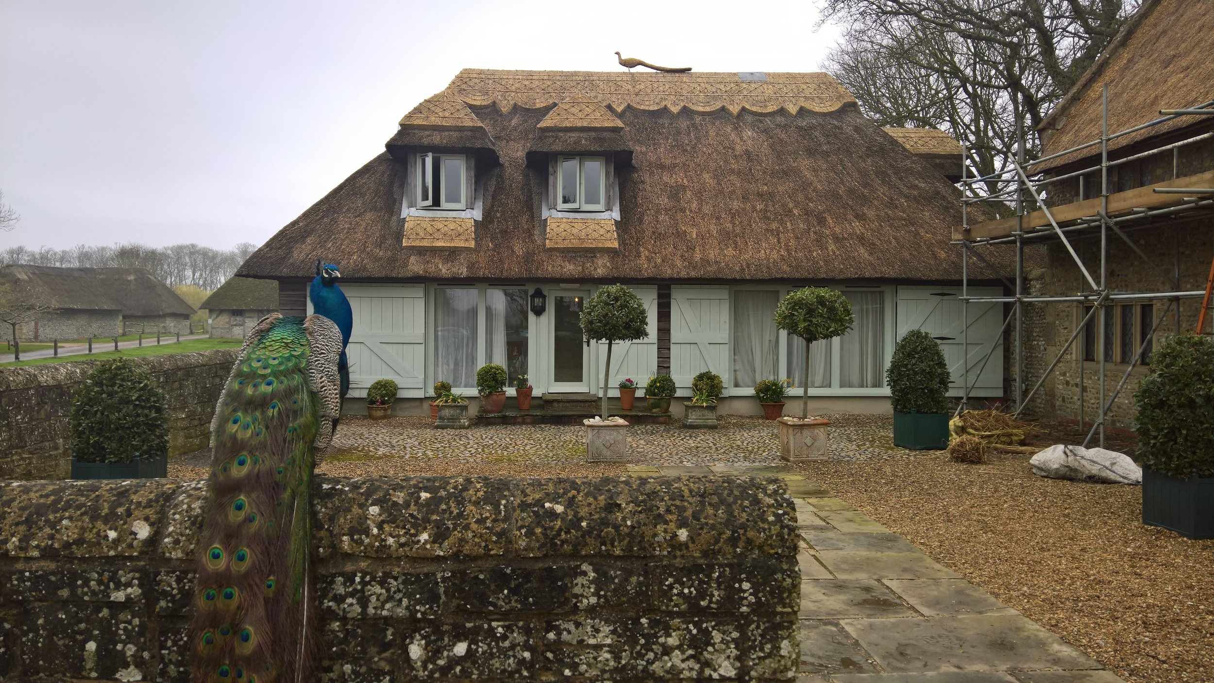 Thatched Cottage in West Sussex