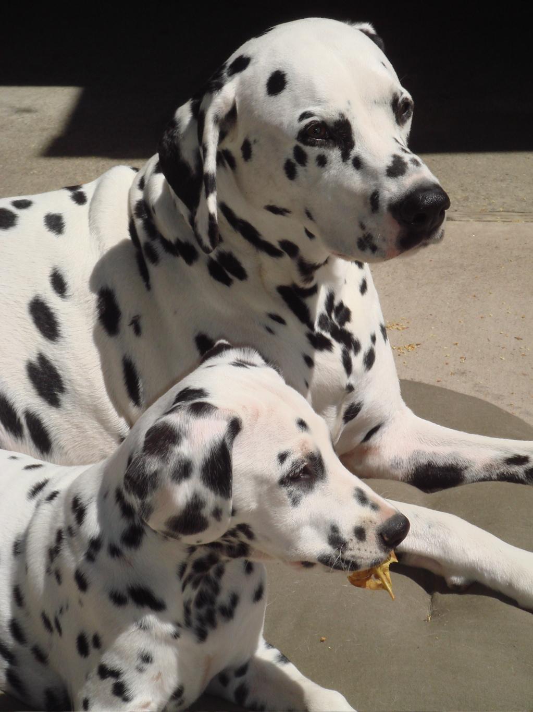 2 dogs.jpg