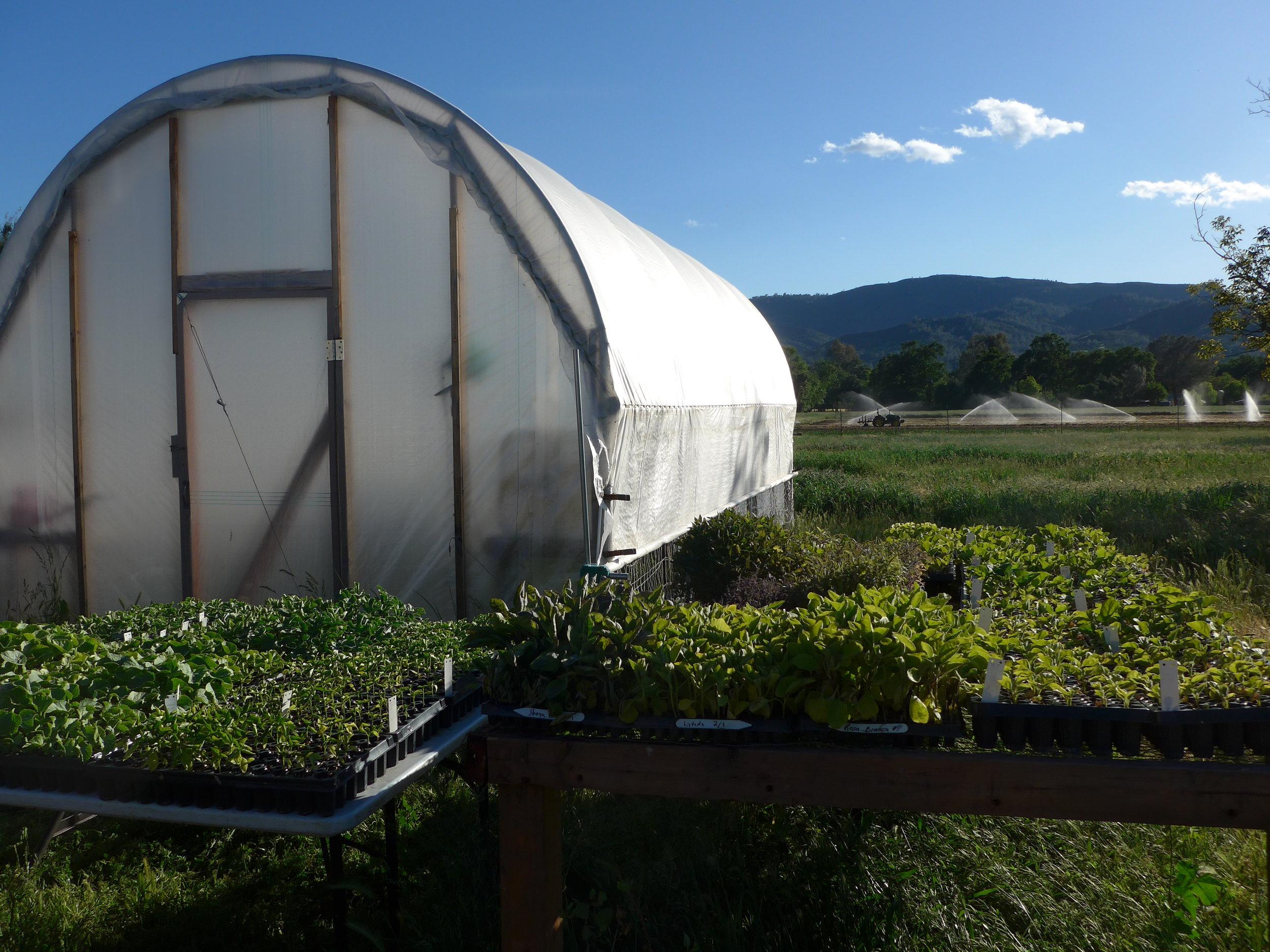 Spring at Sun Tracker Farm