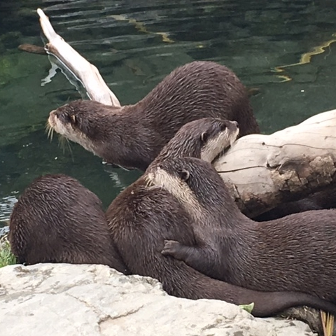 Otters, Wellington Zoo by The Doubtful Traveller