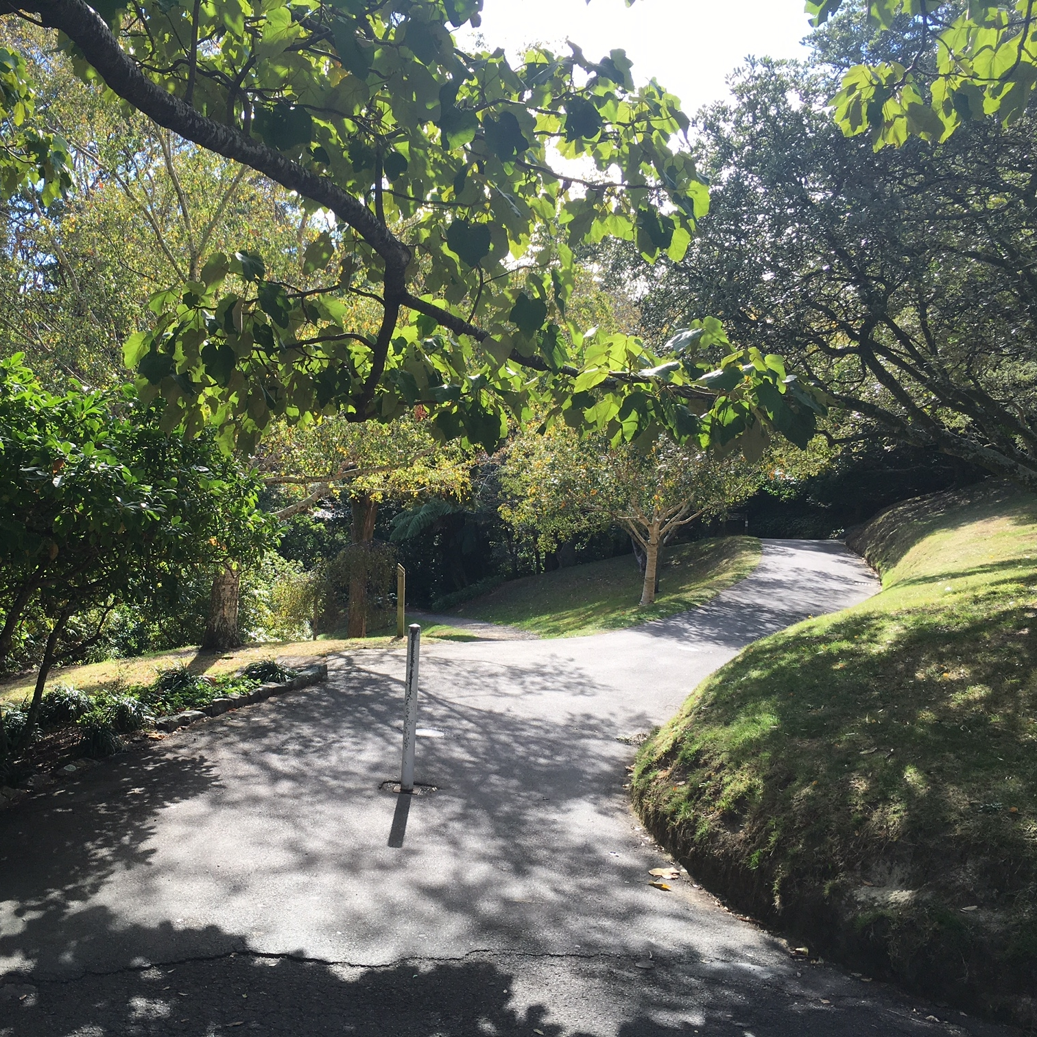 Botanic Gardens, Wellington by The Doubtful Traveller