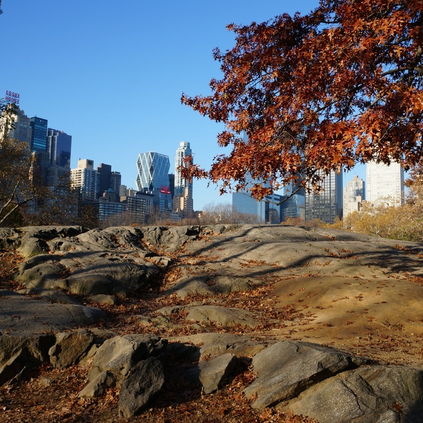 Copy of Central Park, New York, in autumn by Zara Mansoor for The Doubtful Traveller