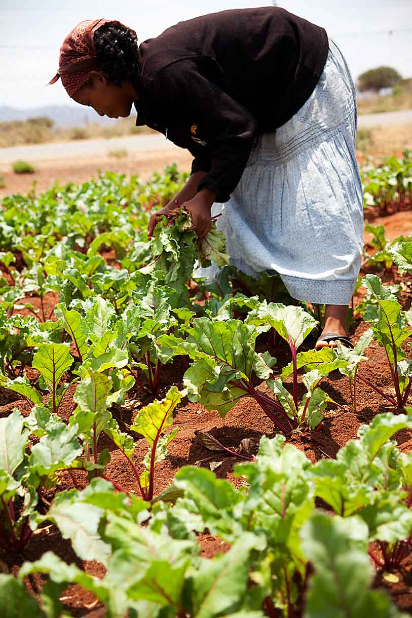In the Limpopo Province of South Africa, CARE is supporting a community garden. The proceeds from the veggies these women sell in the market empower them to improve their lives and the lives of their families.