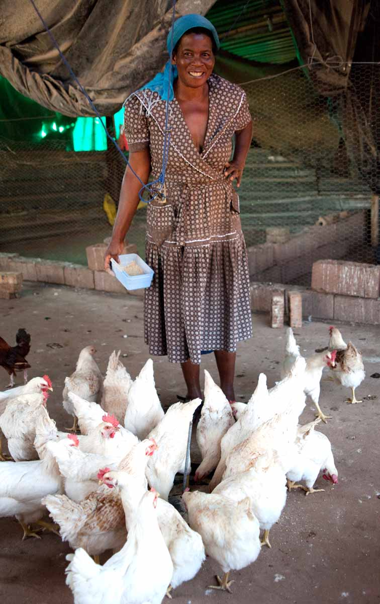 She had a flock of chickens which she tended to carefully.