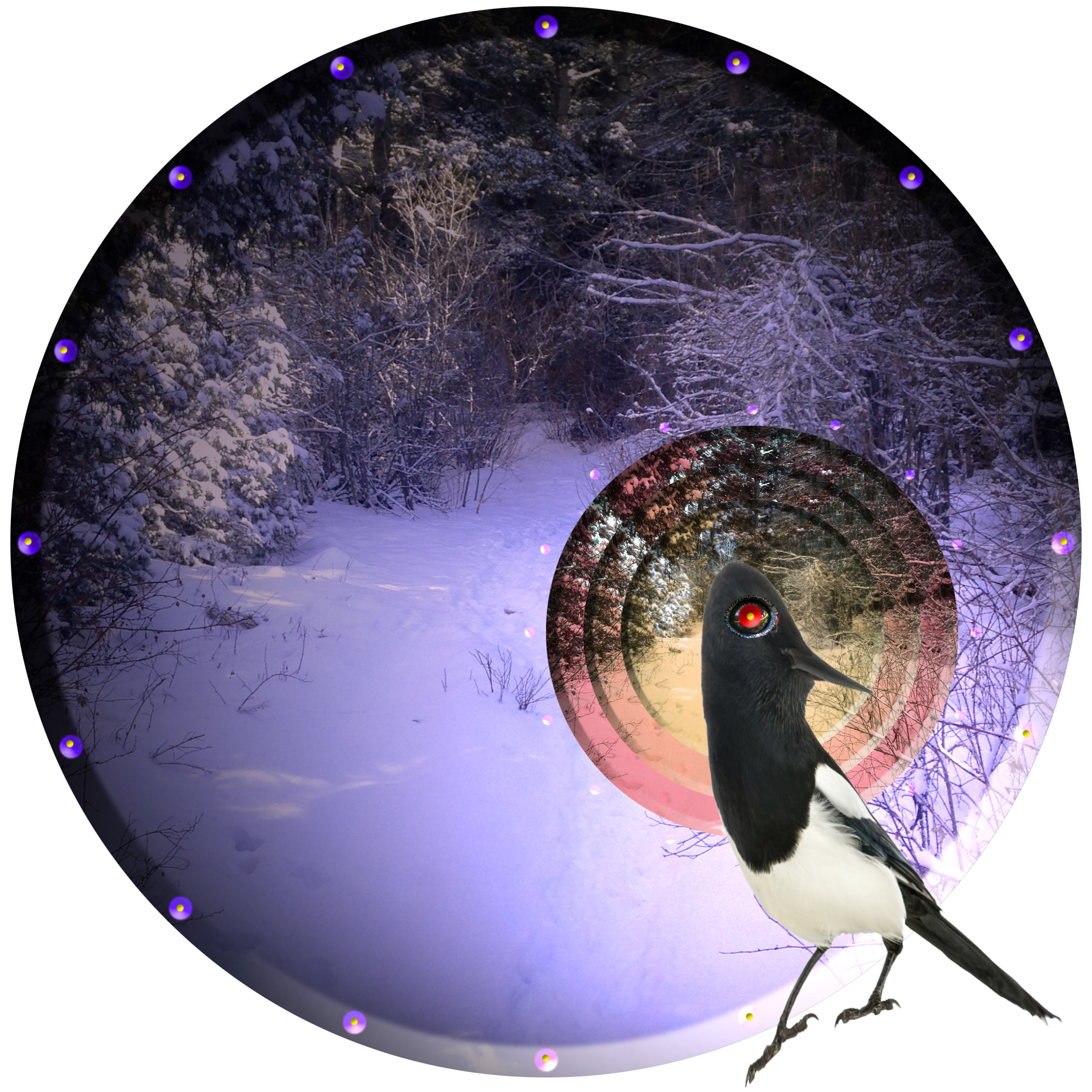 🦅The Magpie is the only non-mammal to recognize its own reflection as itself. 👁Today you will be granted the powers of the magpie, seeing the world as yourself, reflected back at you. 🌏👀
