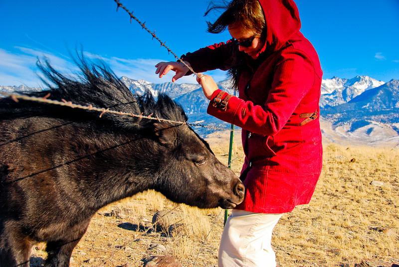 I am suspicious of this miniature horse.