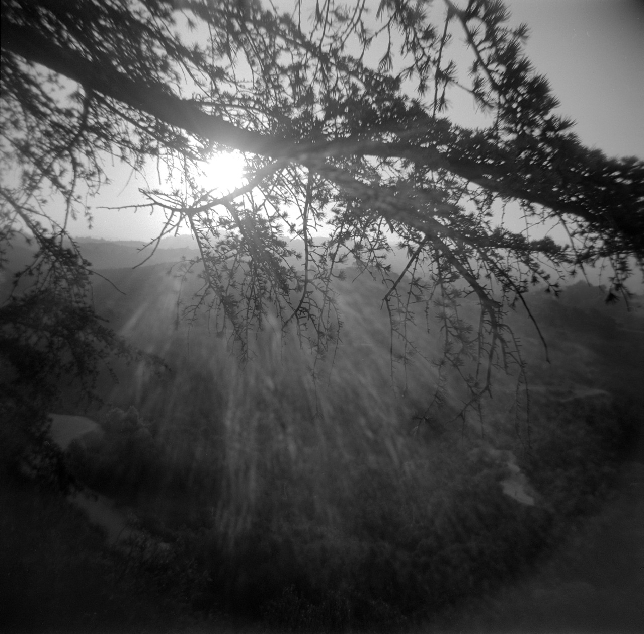 Griffith Park in the late afternoon, Holga, August 2012    Mike  wanted a shot of the sun through the branches, so I obliged.