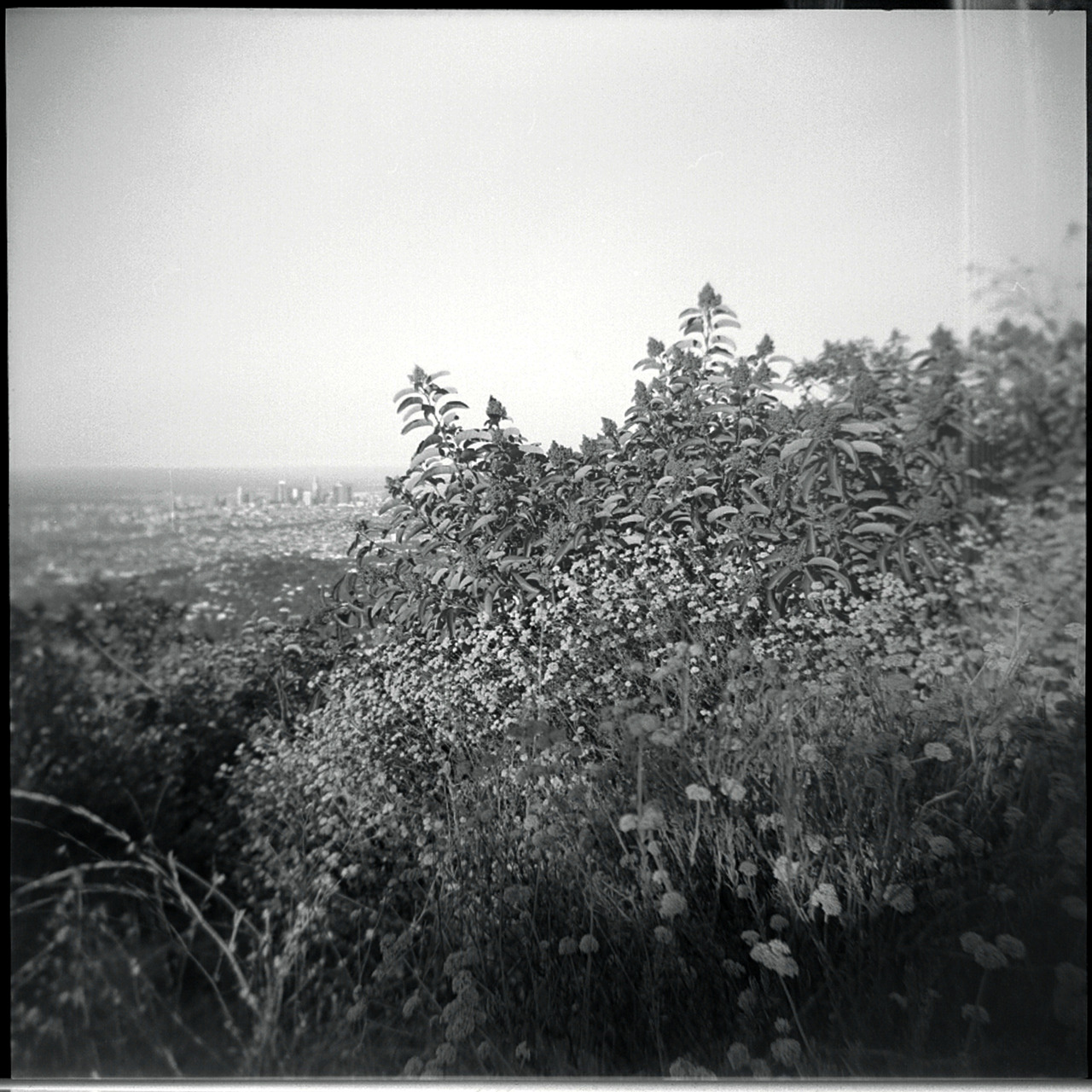 Los Angeles from Burbank Peak, July 2012   Holga, Tri X 400