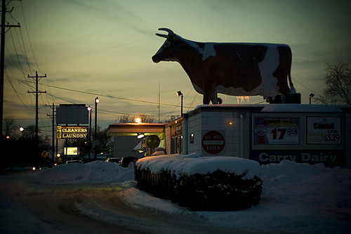 Ypsi Project : Carry Dairy (via  ericarhiannon )   This is the Carry Dairy on Ecorse in Ypsilanti. I understand that the bovine statuary has been there since the stores opening in 1962.