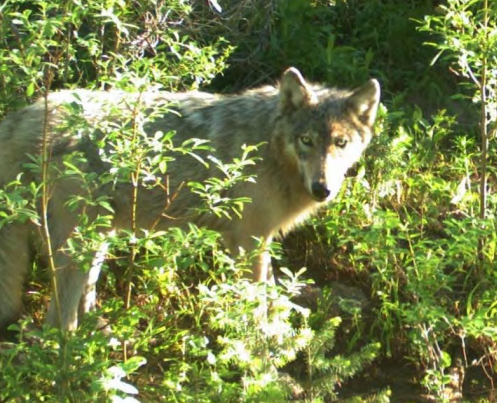 Photo taken by the Idaho Department of Fish and Game