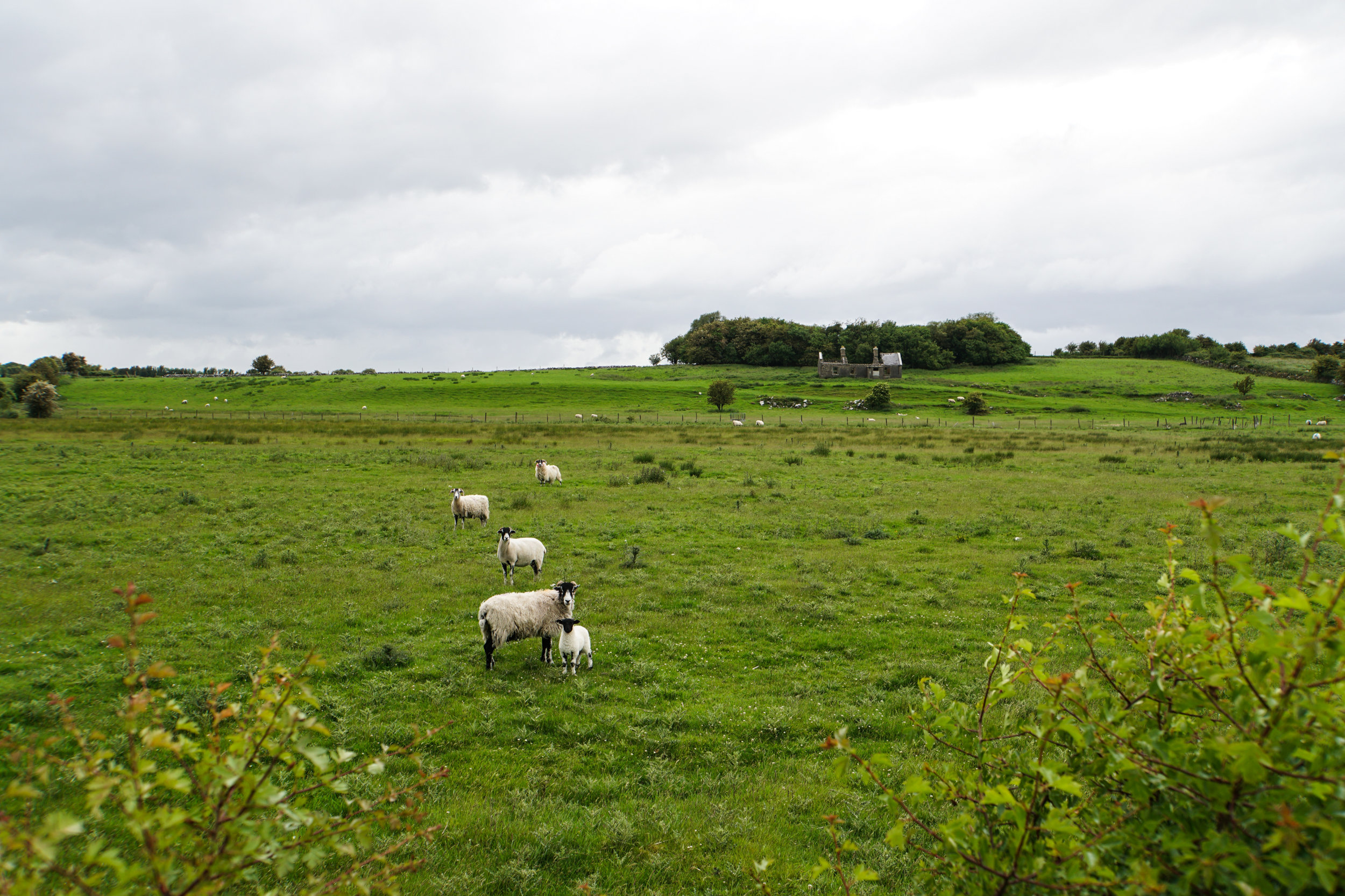 Sheep field castle remains Ireland travel writing