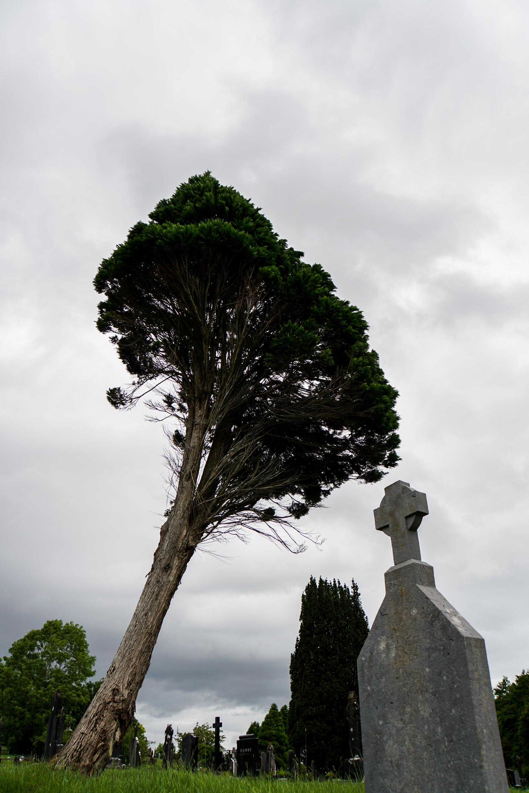 Lineage Ireland essay