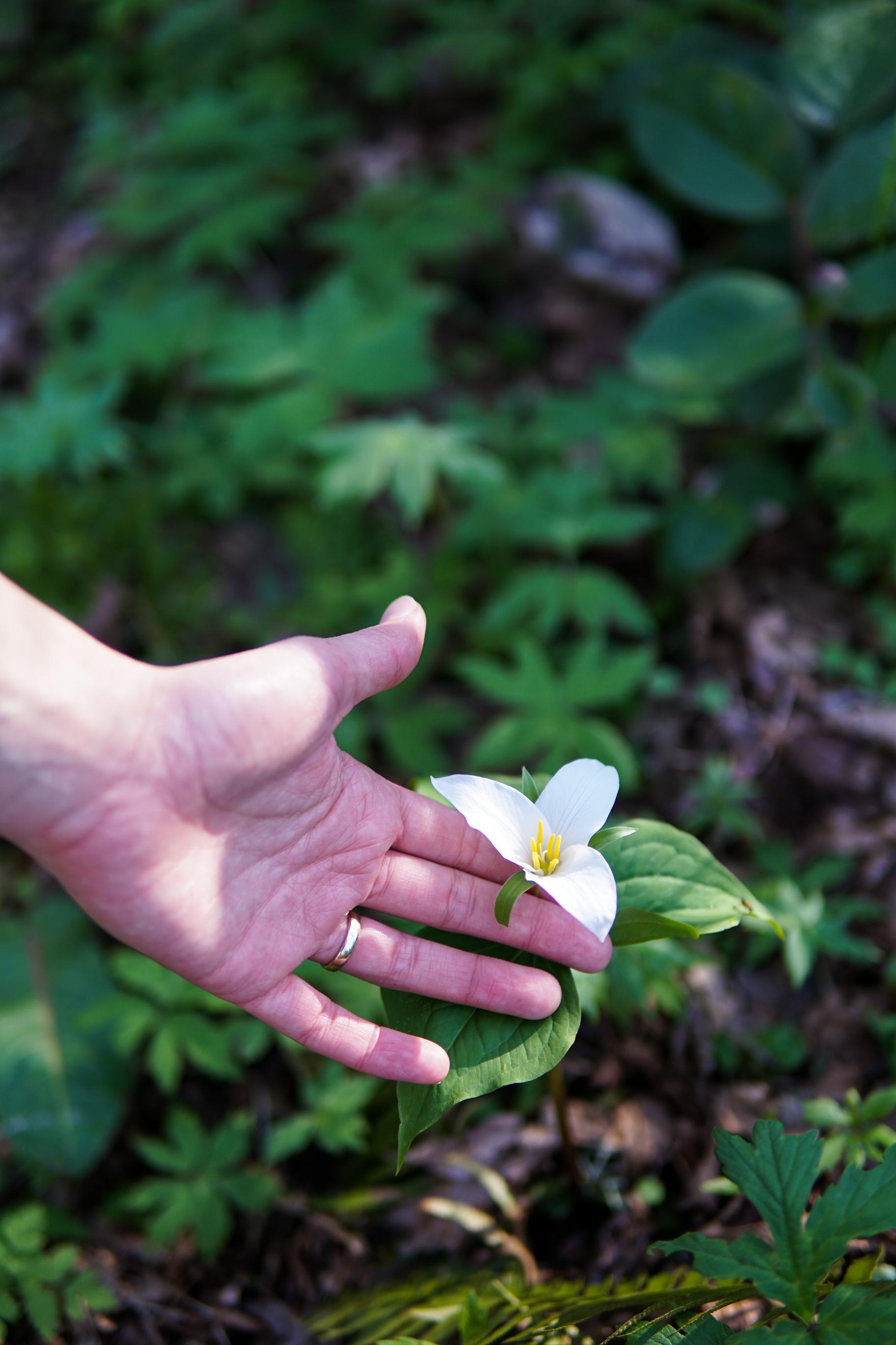 Behold spring flower.jpg