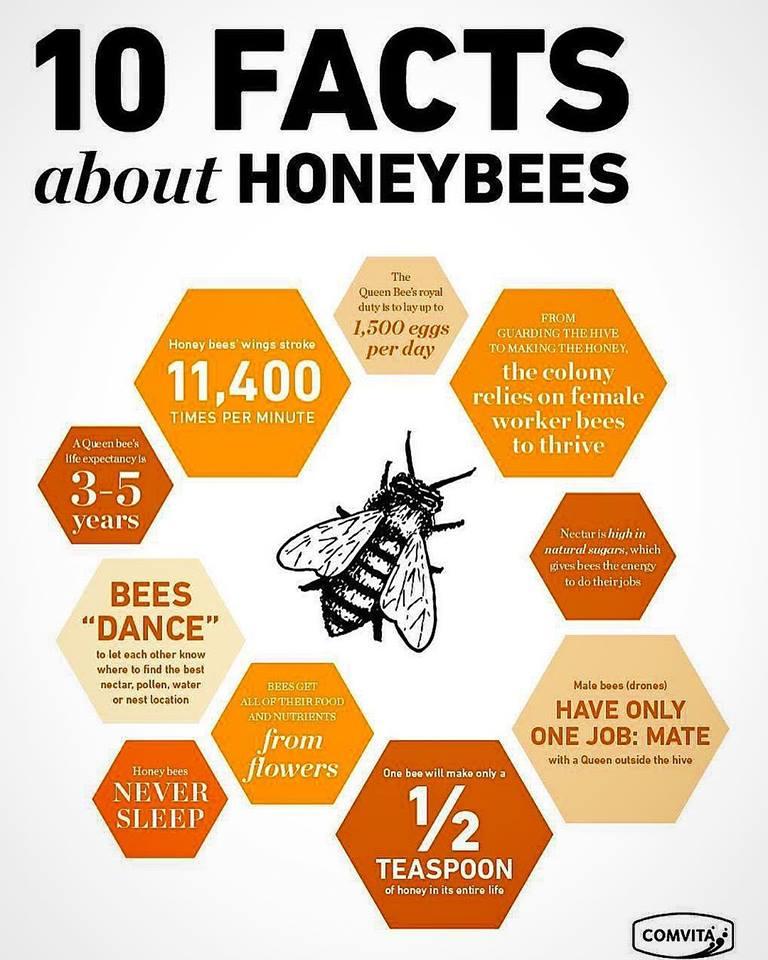 10 facts bees facebook.jpg