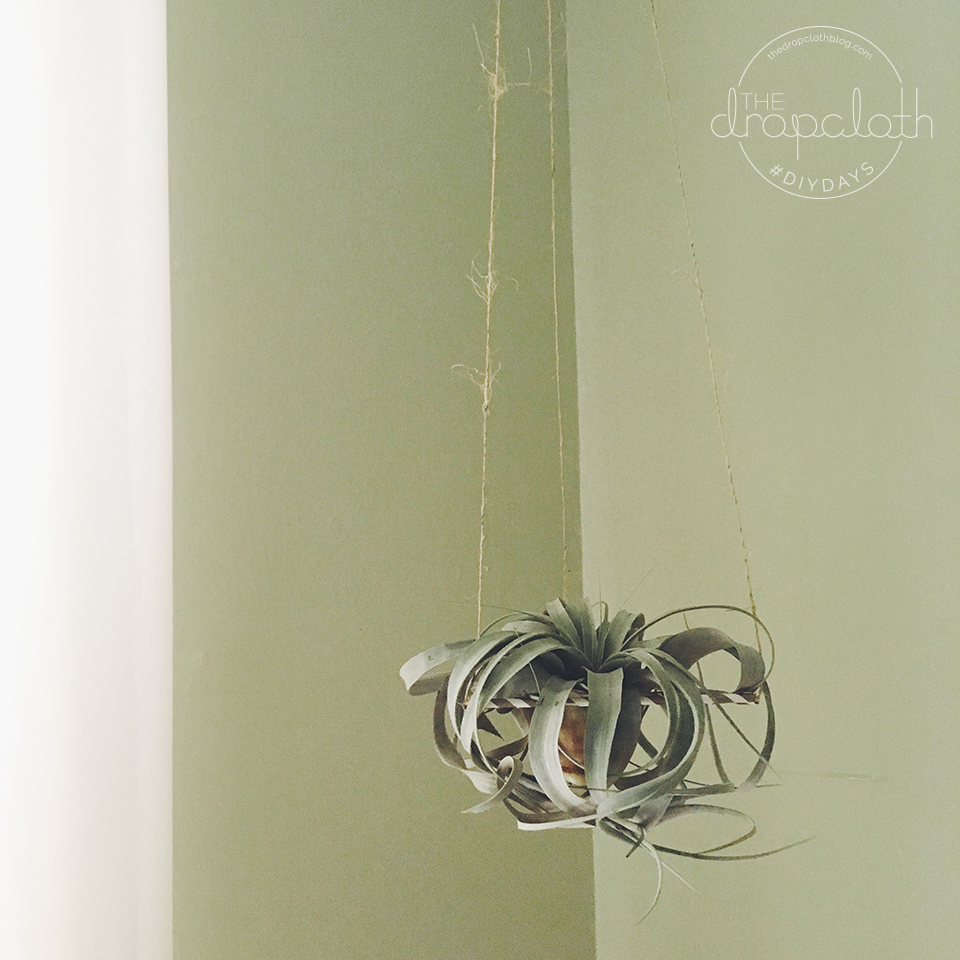 DIY Air Plant Hanger
