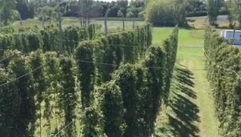 hop farm above.jpg