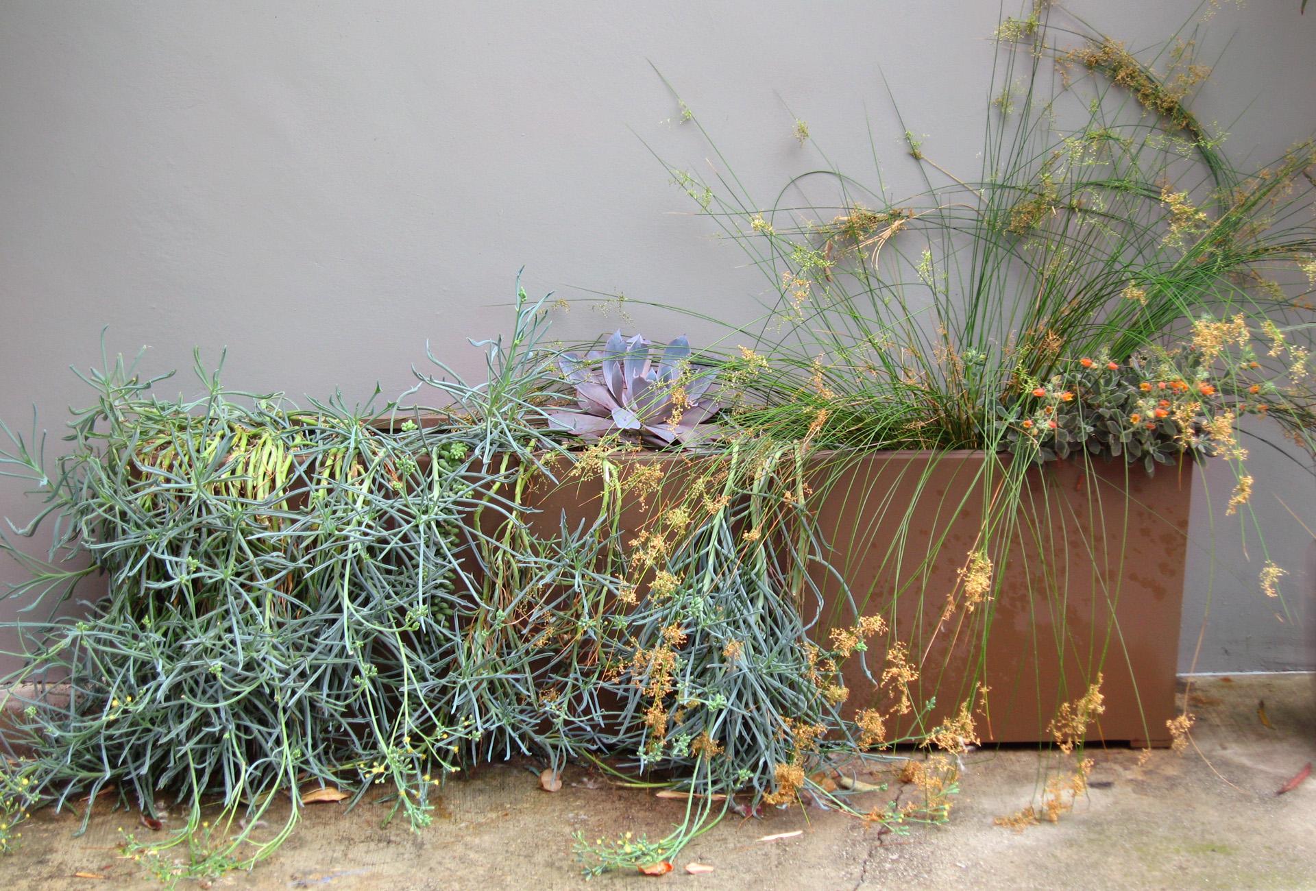 9.Rectangular Succulent Planter.Ketti Kupper.2014.jpg