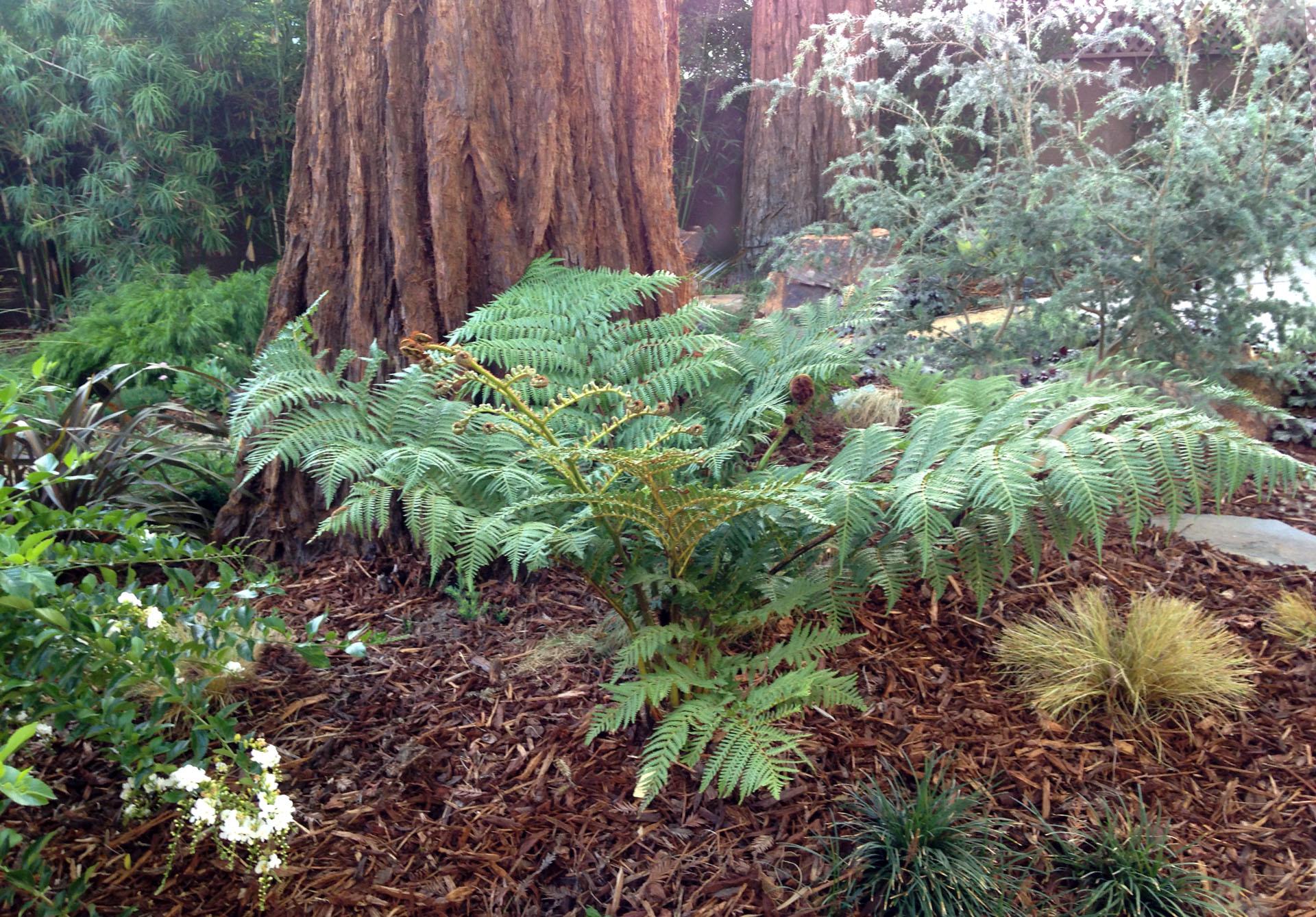 5.Redwoods_Ferns.Ketti.Kupper.jpg