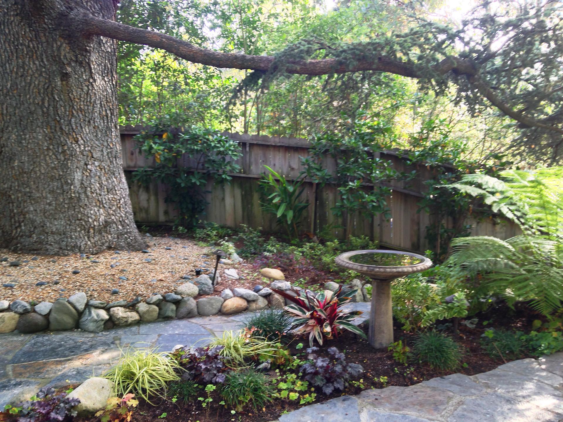 1Bird Bath Grandmother Tree.Ketti.Kupper.jpg