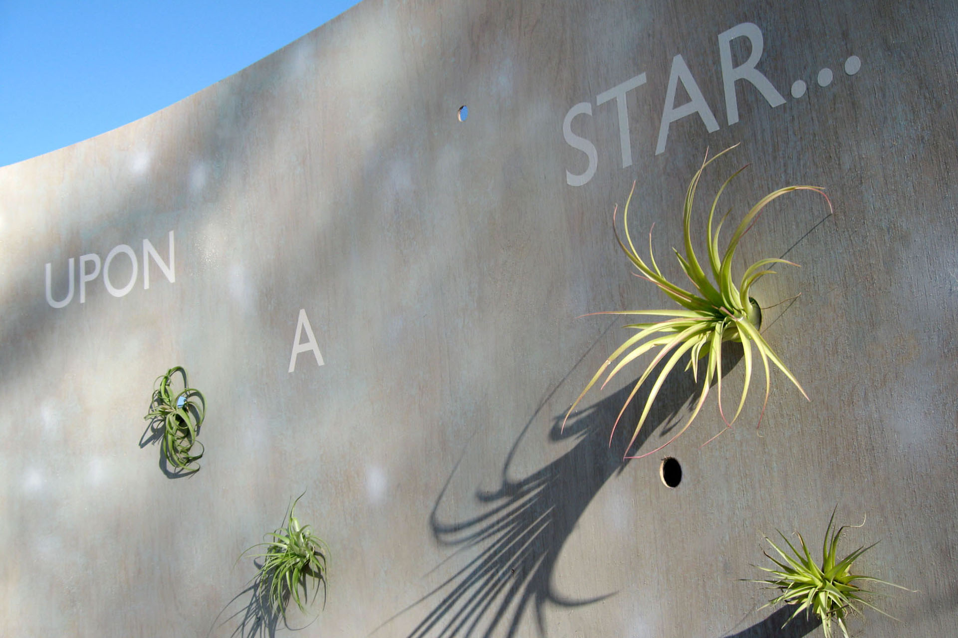 27Arboretum.Wall_of_Wishes.Tillandsia.Ketti.Kupper.jpg