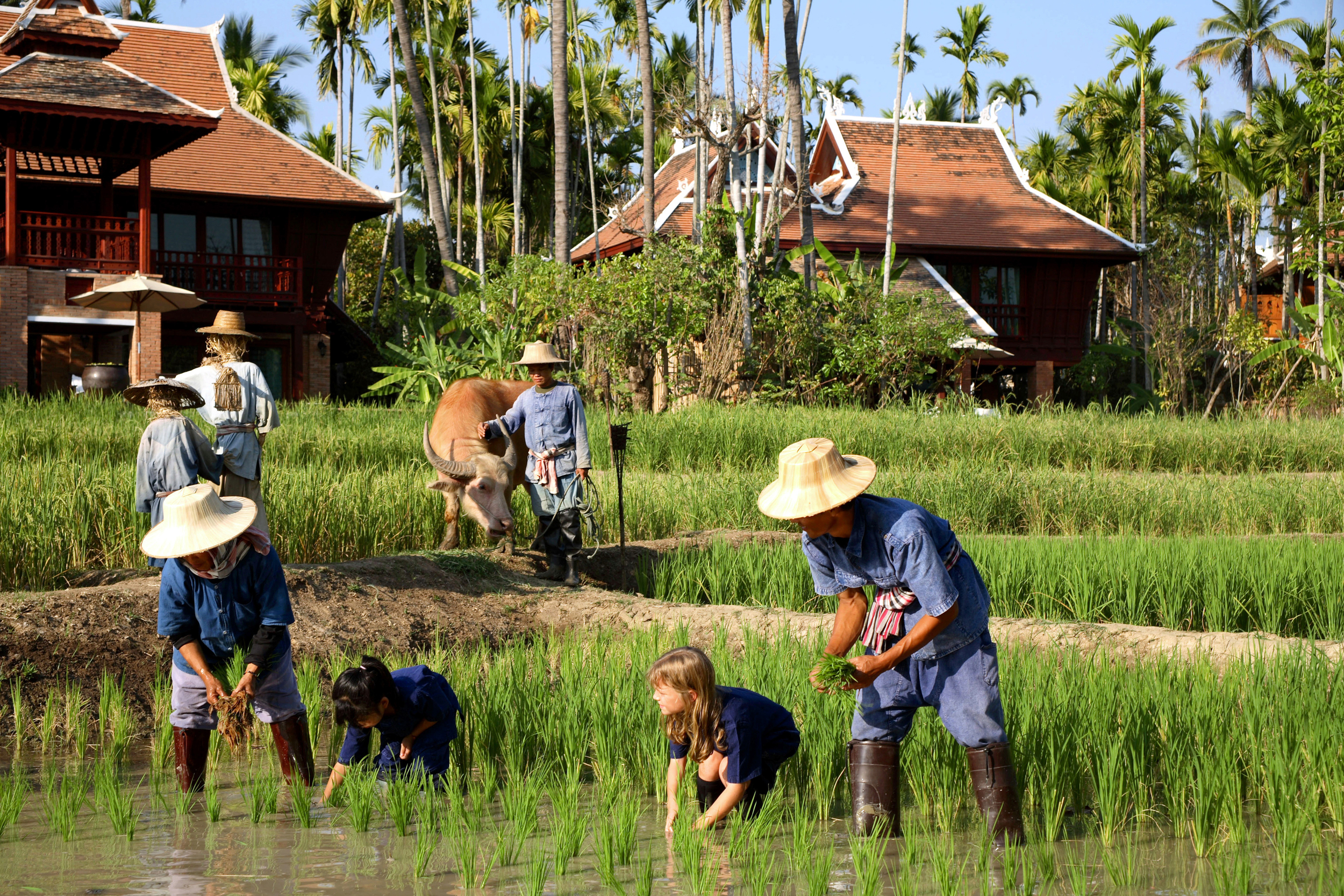 Helping on the rice fields of Dhara Dhevi