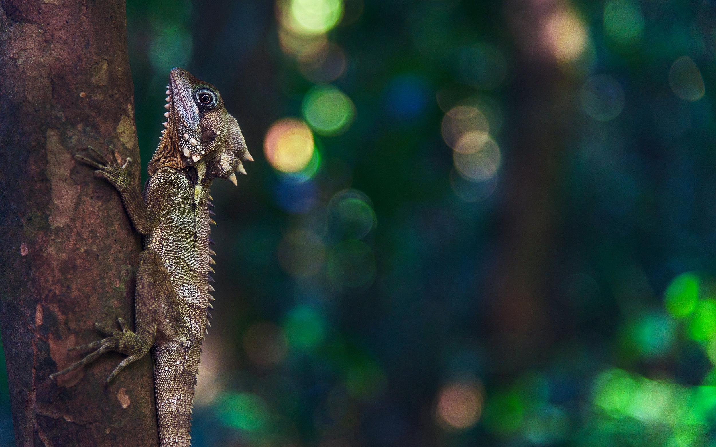 lizard-2168764 (2).JPG