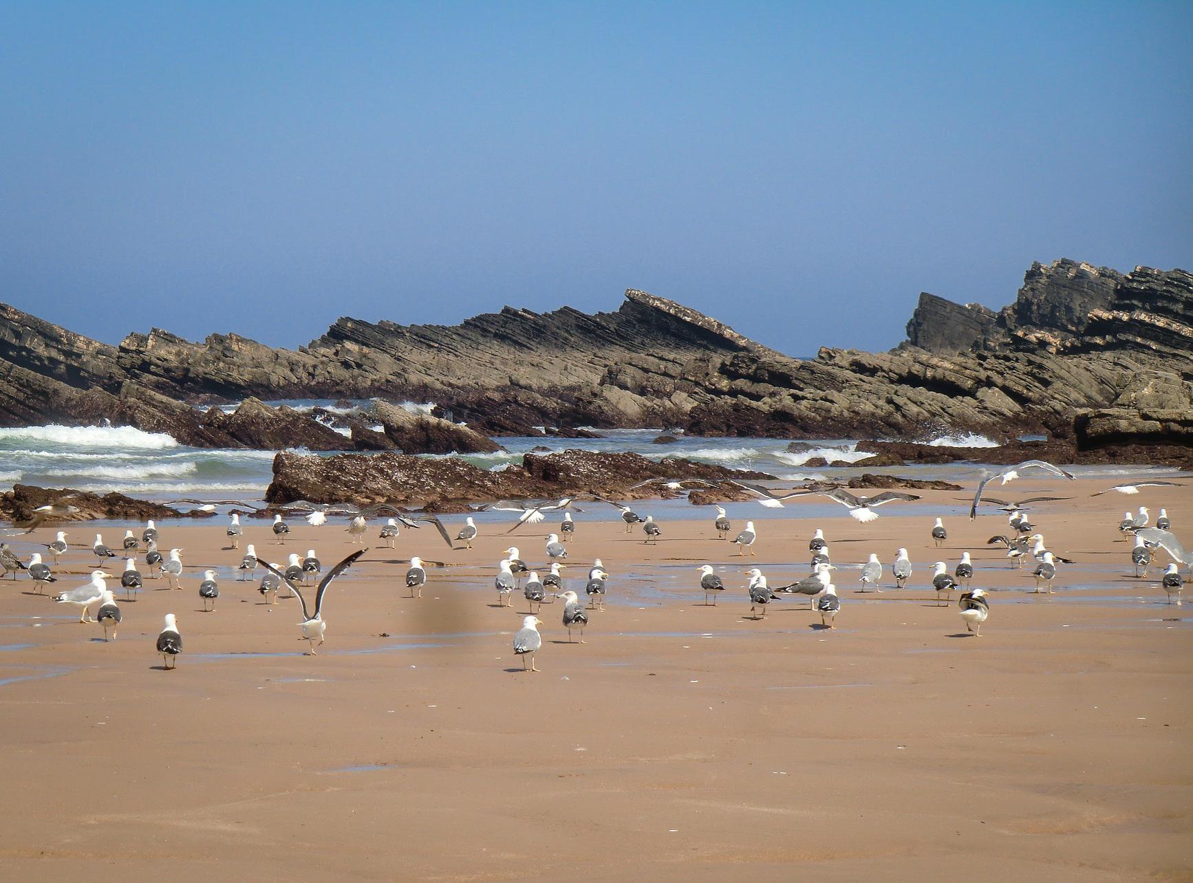 alentejo beach.jpg
