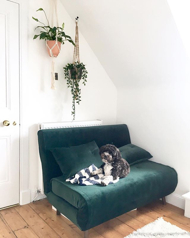 Last week's furry guest in the studio. Mr Ziggy Fenton. Should I steal him from my sister and brother in law more often? He wasn't very sure about the hanging plants 🌱🌿 Green velvet sofa bed by @madedotcom  #studiopuppy #homestudio #scottishcalligrapher #calligraphystudio #calligraphy #officedecor #homeoffice
