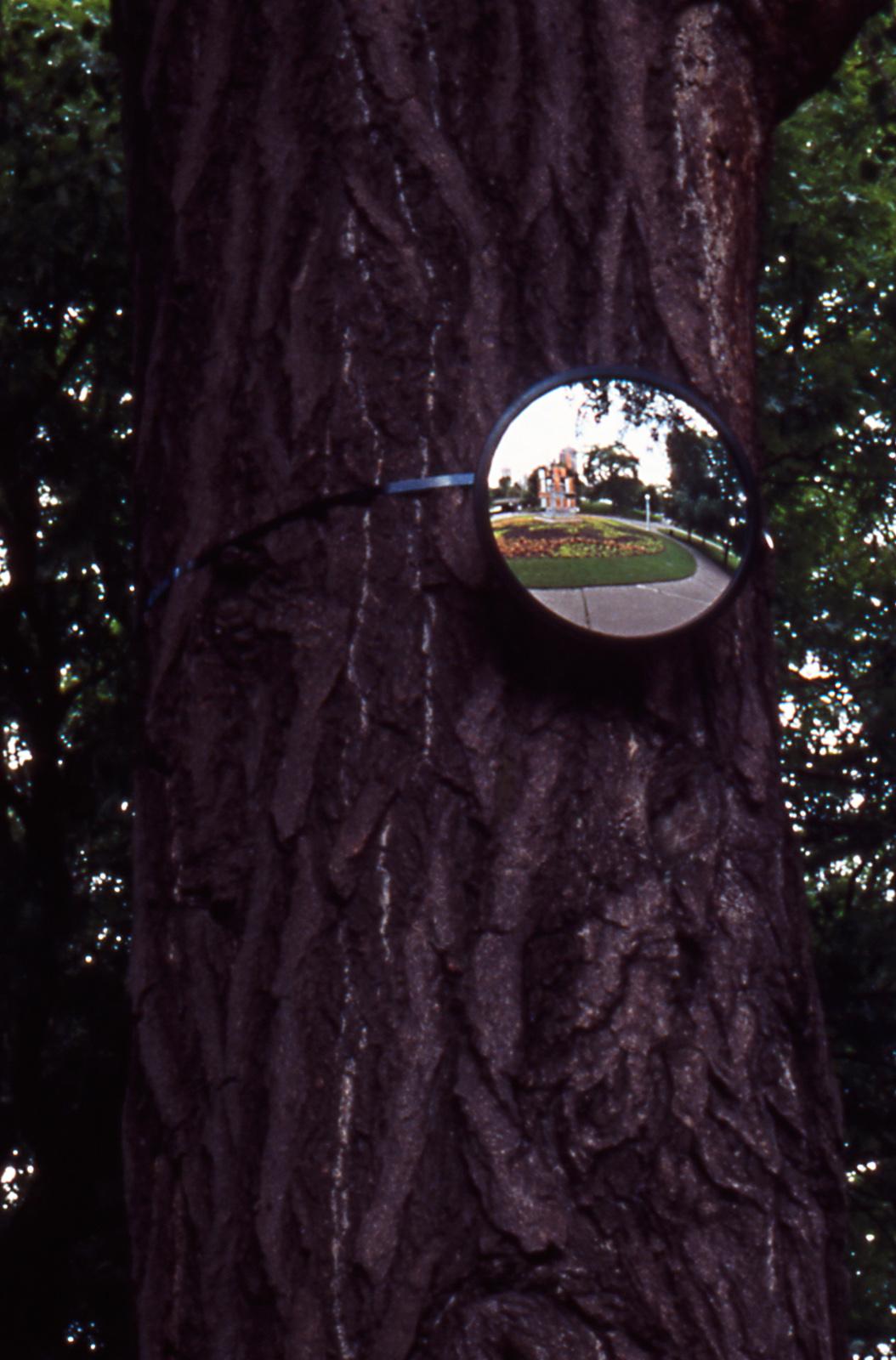 Invisible Garden: installation view and surveillance mirror detail 2004