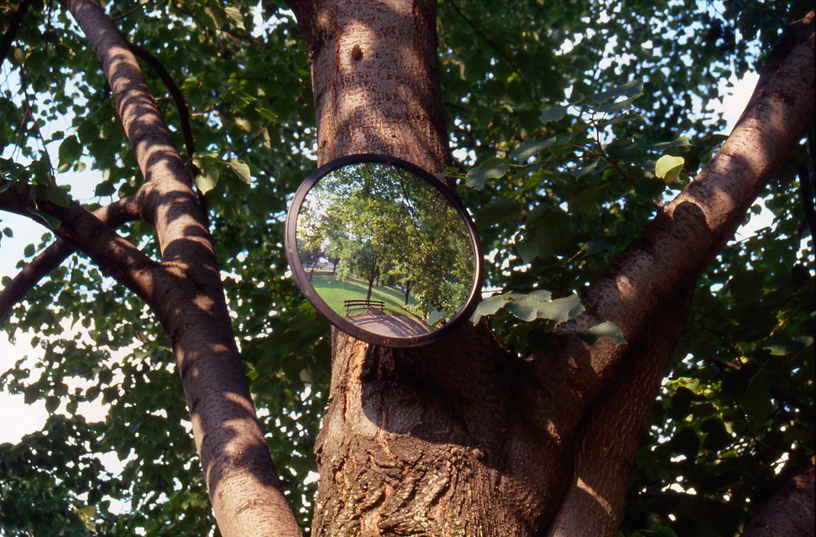 Invisible Garden: surveillance mirror detail 2004