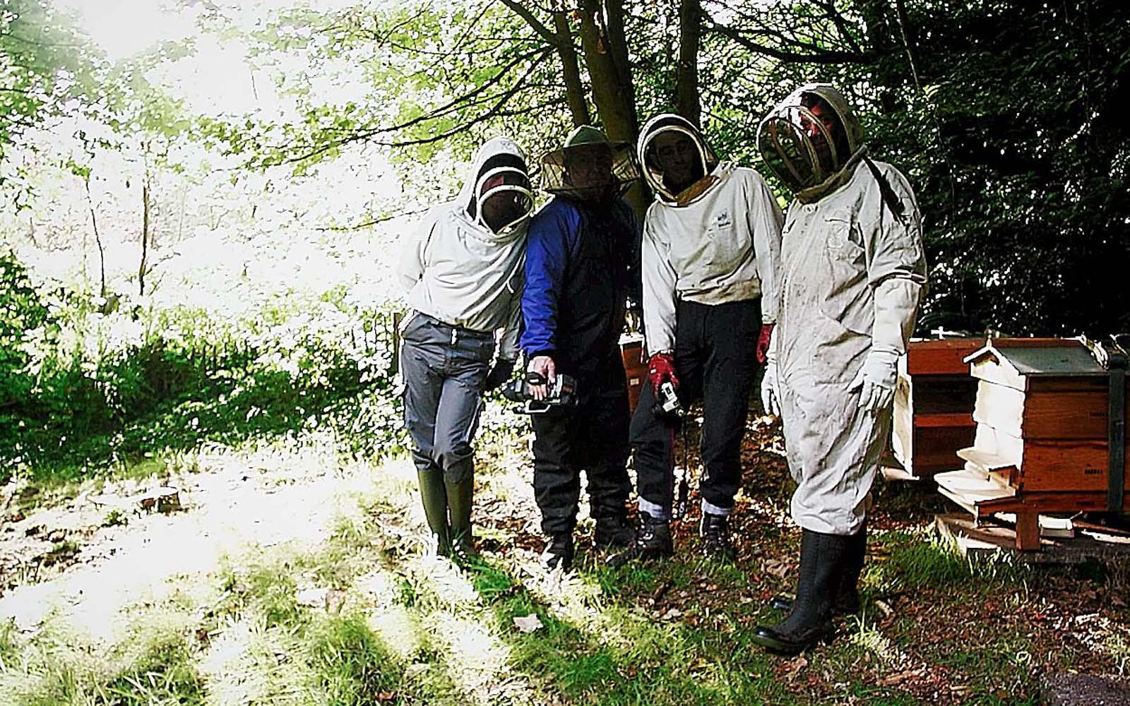 volvo-bees-4p.jpg