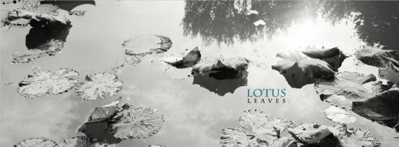 Lotus Leaves, 2018 Wairarapa Academy Occasional Publication No. 1, New Zealand