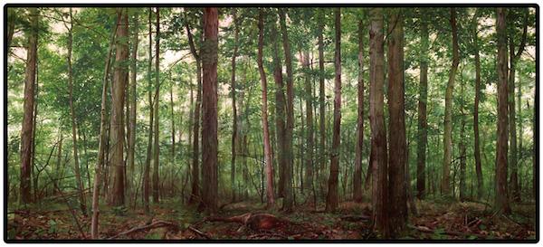 nature58x132.jpg