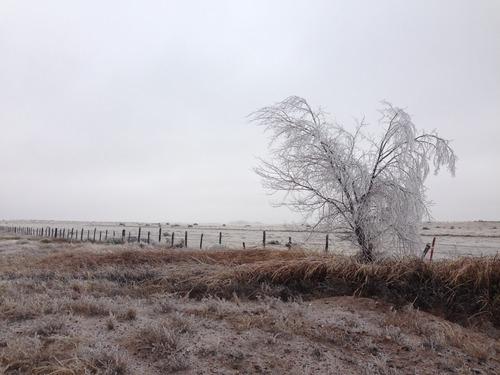 ice storm 1.jpg