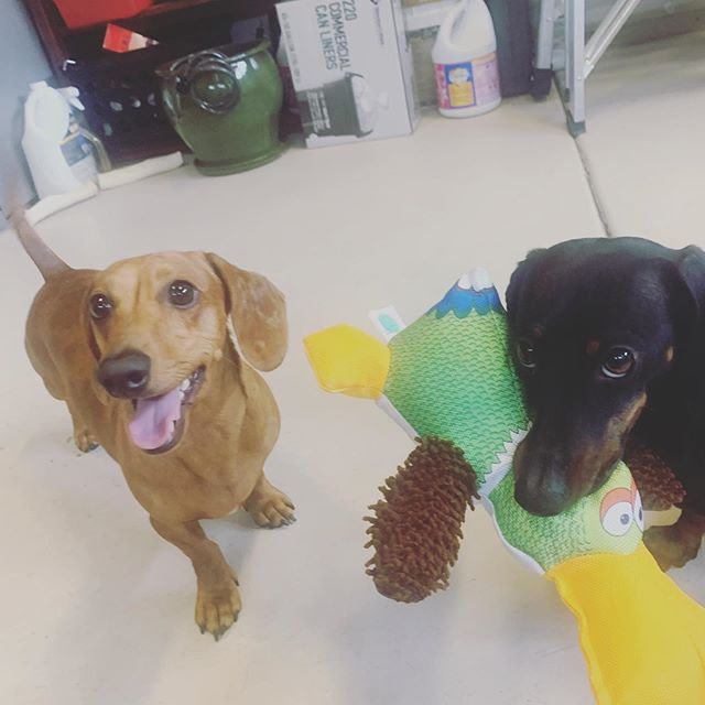 Very happy about toys :)