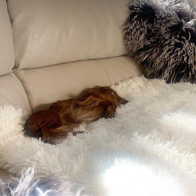 Fluffy all around ☁️