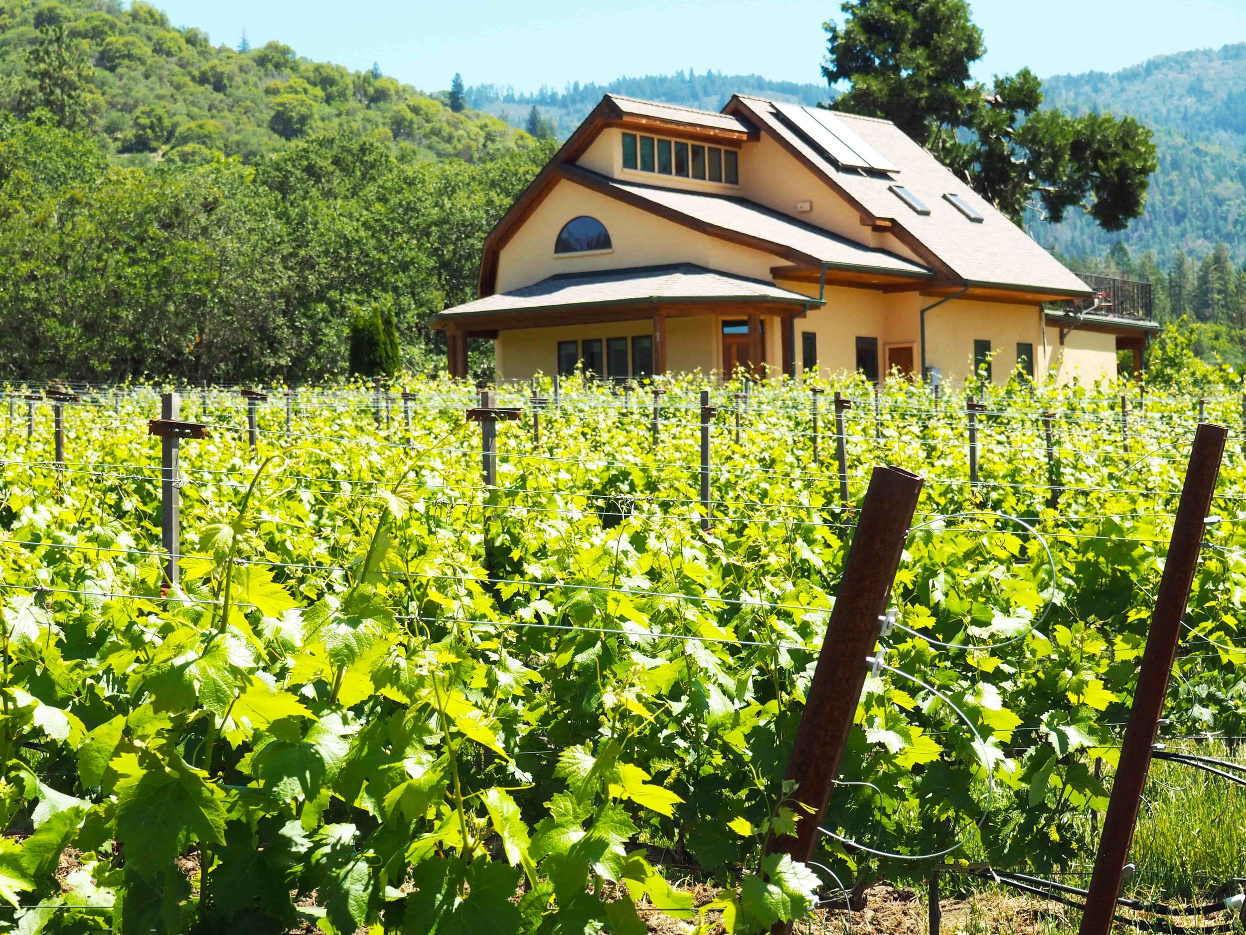 cottage vineyard view.jpg