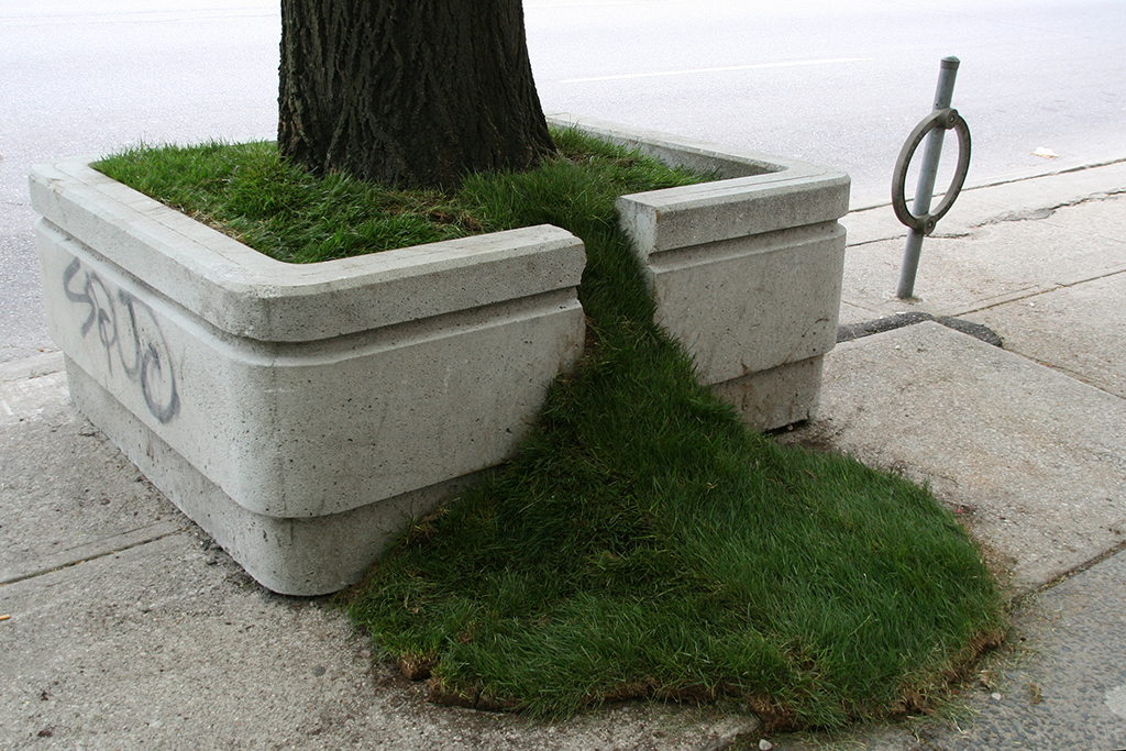 Outside the Planter Boxes – Grass Spill , 2011. Sean Martindale artist. Photo by Sean Martindale.