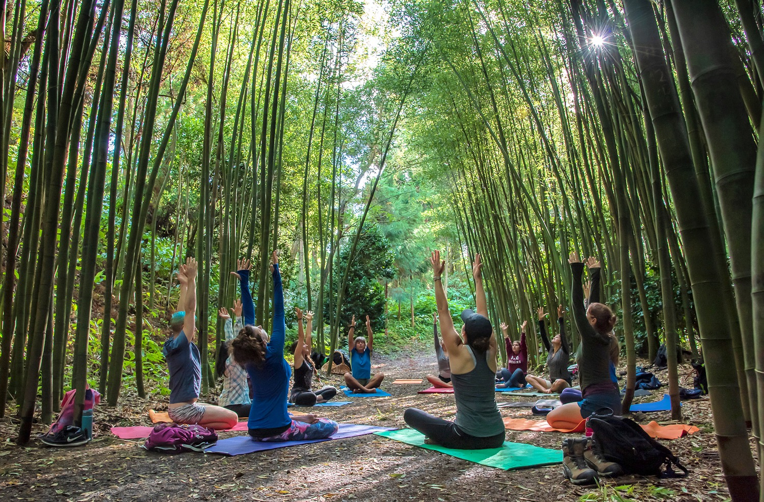 Yoga in a bamboo forest on our retreat in Sao Miguel  Photo by Josh Alves