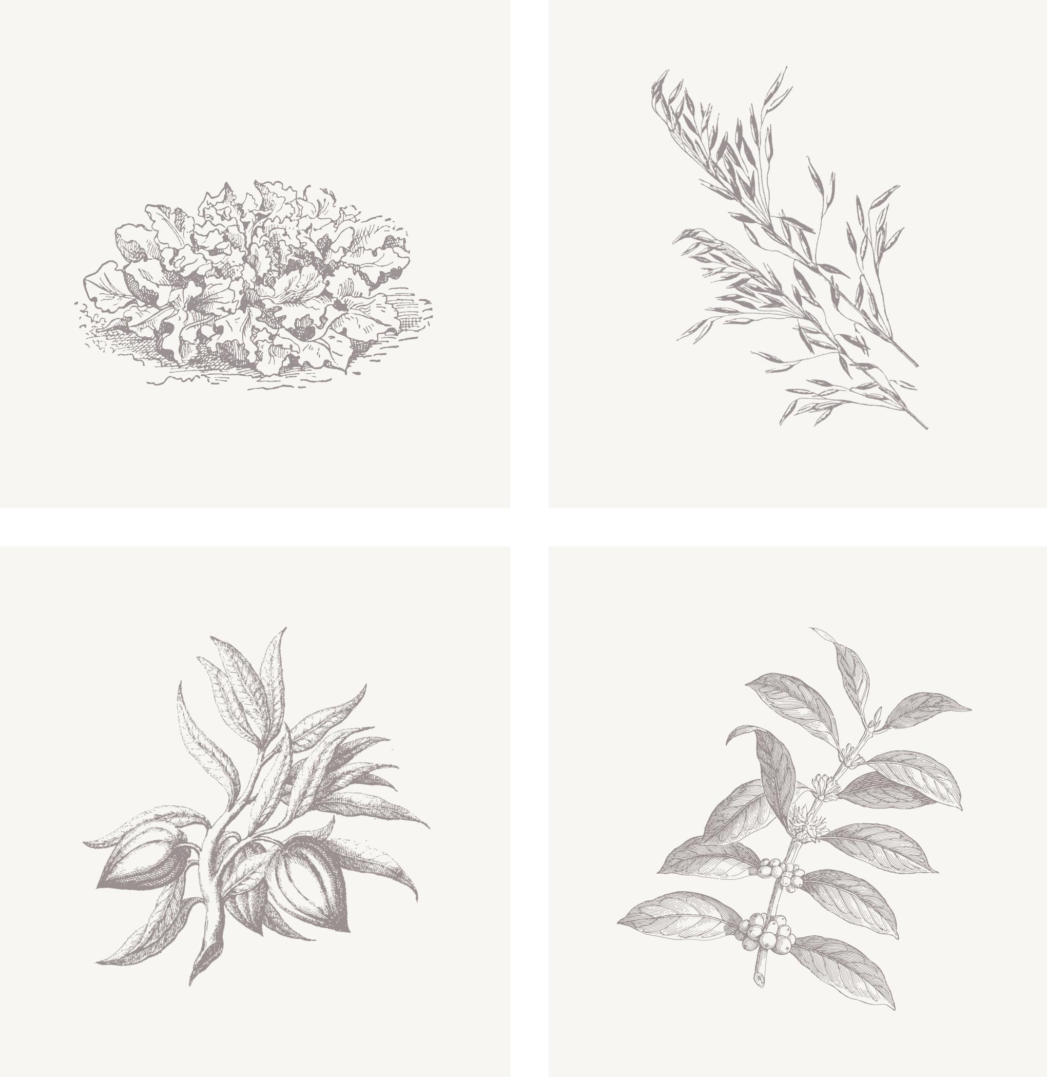 Lucia_illustrations2.jpg